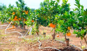 Datos clave del sector agroalimentario en Valencia e industria 4.0 en España